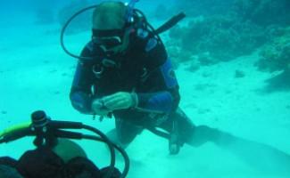 Команда Новосибирской области  стала лучшей на чемпионате России по подводному ориентированию